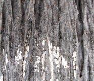 Un vieux modèle d'écorce d'arbre, texture, milieux en bois de conseil, arbre sec, vieille surface, style de cru images stock
