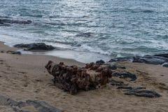 Un vieux moteur diesel du ` s de bateau abandonné à la plage, grande île, Hawaï Photographie stock