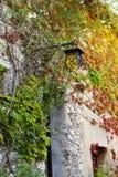 Un vieux mur de bâtiment couvert de vignes dans des couleurs d'automne Photographie stock libre de droits