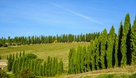 Un vignoble encadré par le cyprès en Toscane, Italie Image stock