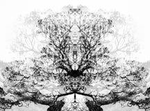 Un visage dans les arbres noirs et blancs Image libre de droits