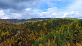 Un vol aérien de primevère farineuse au-dessus de la forêt Russie Bouriatie d'automne de route banque de vidéos