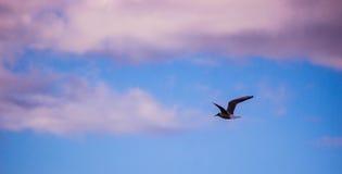 Un vol de mouette dans le ciel Image stock