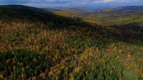 Un volo aereo di veronica sopra la foresta Russia Buriazia di autunno della strada archivi video