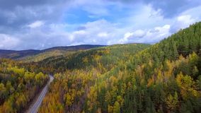 Un volo aereo di veronica sopra la foresta Russia Buriazia di autunno della strada stock footage