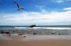 Un volo del gabbiano alla spiaggia immagine stock libera da diritti
