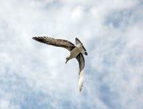 Un volo dell'uccello fotografie stock