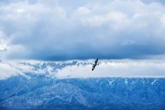 Un volo dell'uccello nel cielo Fotografia Stock Libera da Diritti