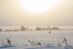 Un volo dell'uccello nel landscap ventoso nevoso misterioso della bufera di neve di inverno fotografie stock libere da diritti