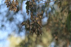 Un volo della farfalla di monarca a è mazzo immagine stock