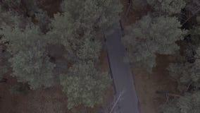 Un volo sopra un Forest Park, pini, sorvolando le cime d'albero e una strada con un segno limite di velocità stock footage