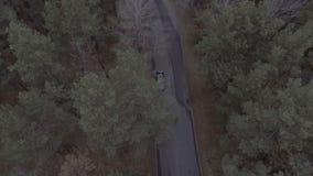 Un volo sopra un Forest Park, pini, sorvolando le cime d'albero e una strada con un segno limite di velocità di 20 km/ora, più stock footage