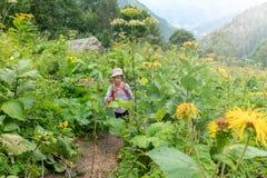 Un voyageur de garçon avec des poteaux d'un trekking marche le long d'une traînée dans l'herbe grande épaisse photos libres de droits