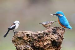 Un vrai oiseau et un oiseau bourré Grande mésange et mésange et roitelet longtemps coupés la queue bourrés photo libre de droits