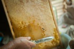 Un vuelo de la abeja a tomar Foto de archivo libre de regalías