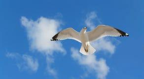 Un vuelo de la gaviota Imagen de archivo