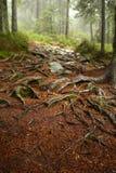 Un Web d'arbre enracine l'élevage au-dessus des roches à côté d'un sentier de randonnée Un banc en bois et une table à l'arrière- Photos libres de droits
