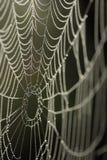 Un Web de araña Imágenes de archivo libres de regalías