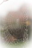 Un Web de araña espantoso bastante asustadizo para Halloween Foto de archivo