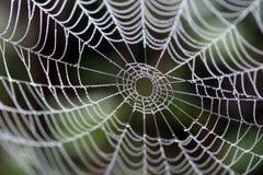 Un Web de araña Fotografía de archivo