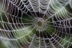 Un Web del ragno Fotografia Stock