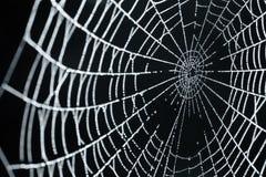 Un Web di ragno con le gocce di rugiada Fotografia Stock
