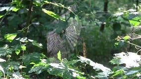 Un web entre los árboles en el bosque almacen de metraje de vídeo