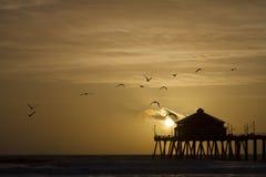 Un Willet en la playa foto de archivo libre de regalías