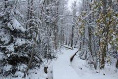 Un winterday gentil en Suède Photographie stock libre de droits