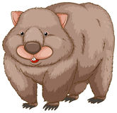 Un wombat illustration stock