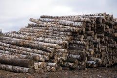 Un woodpile de la madera del fuego del abedul apilada encima de uno a Imagen de archivo libre de regalías