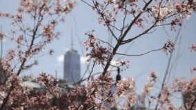 Un World Trade Center se enfocó a través de los cerezos florecientes en primavera en Tribecca, Nueva York, Estados Unidos metrajes