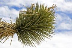 Un yucca près de Death Valley Photographie stock