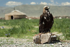 Un yurt y un águila de la caza Foto de archivo libre de regalías