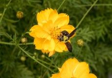 Una abeja Fotografía de archivo libre de regalías