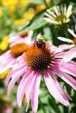 Una abeja en el jardín 2 Imagen de archivo