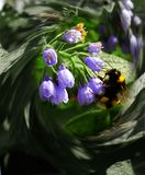 Una abeja en una flor en vuelo fotos de archivo