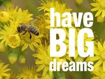 Una abeja en las flores amarillas con cita inspirada Fotografía de archivo libre de regalías