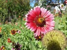 Una abeja en una flor Foto de archivo