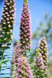Una abeja en una flor floreciente Fotografía de archivo libre de regalías