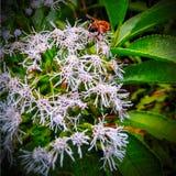 Una abeja en una flor, maravillosa Imagen de archivo