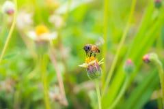 una abeja encaramada en la flor hermosa Fotos de archivo
