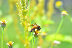 una abeja encaramada en la flor hermosa Foto de archivo libre de regalías