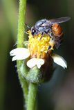 una abeja encaramada en la flor hermosa Imagen de archivo