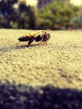 Una abeja hermosa Imágenes de archivo libres de regalías