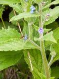Una abeja inmóvil que toma el polen de una planta con licencia verde grande Imagenes de archivo