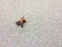 Una abeja muerta en el piso Imagen de archivo