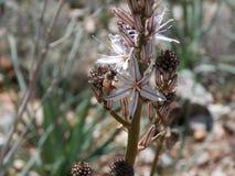 Una abeja que consolida en el top de una flor en la primavera Imagenes de archivo