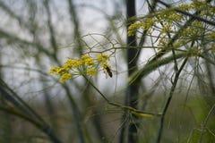 Una abeja que cuelga encendido a una planta Imágenes de archivo libres de regalías