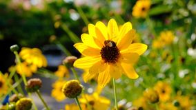 Una abeja recoge el polen de las flores C?mara lenta metrajes